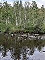 Спокойная река.jpg