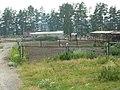 Ферма по разведению гусей - panoramio.jpg