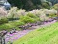 上河内緑水公園 2012年5月 - panoramio (1).jpg
