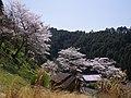 下市町谷にて 2013.4.05 - panoramio.jpg