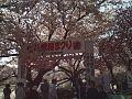 八幡桜まつり - panoramio (1).jpg