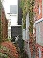 函館の猫 - panoramio.jpg