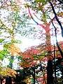 小石川植物園(2009.11.28撮影) - panoramio (5).jpg