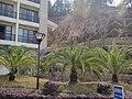 御温泉酒店的花坛 - panoramio.jpg