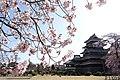 松本城桜1.jpg