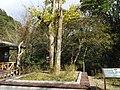 滿月圓森林遊樂區遊客中心 Manyueyuan Forest Recreation Area Visitor Center - panoramio (1).jpg