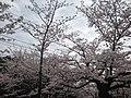 玖島城跡 - panoramio (8).jpg