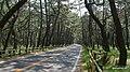 虹ノ松原 - panoramio (1).jpg
