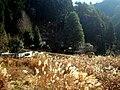 高山集落 - panoramio (3).jpg