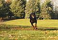 01 My Dobermann Kitty Running.jpg