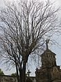 137 Cementiri del Poblenou.jpg