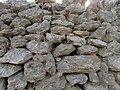 14-09-2017 Dry stone wall in Caliços, Albufeira.JPG
