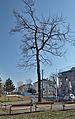 1908 KFJ I monument Liesing - tree.jpg