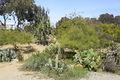 1935 (Old) Cactus Garden 4.JPG