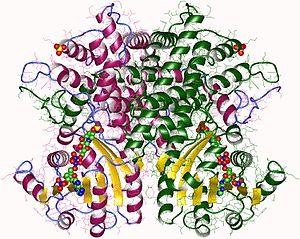 Phosphogluconate dehydrogenase (decarboxylating) - Phosphogluconate dehydrogenase dimer, Sheep