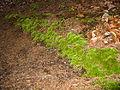 2008 04 06 - Russett - Moss in the nature reserve 2.JPG