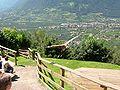 2008 07 15 Bird Care Centre of Castel Tyrol 61370 D9962.jpg