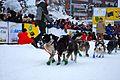 2010 Yukon Quest (4341598278).jpg