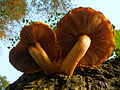 2012-10-25 17-59-46-mushrooms.jpg
