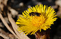 2014-03-10 12-43-42 insecte-fleur.jpg