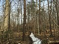 2016-02-08 12 43 39 View north along the Gerry Connolly Cross County Trail between Miller Heights Road and Vale Road in Oakton, Fairfax County, Virginia.jpg
