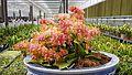 2017-04-20 Shouguang Vegetable SciTech Fair 2.011 anagoria.jpg
