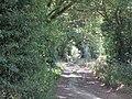 2018-07-24 Sandy Lane, Hungry Hill, Norfolk (5).JPG