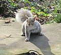 2018 Fort Tryon Park - squirrel.jpg