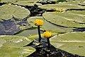 3 Флора і фауна Русанівської протоки.jpg