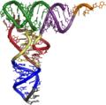 3d tRNA.png