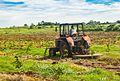 4-Tractor chapeando para futura siembra.jpg
