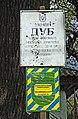 400-хлетний дуб с.Вольное Черниговская обл..jpg
