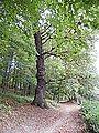 403 oak Gdańsk.jpg