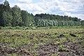 5 dzērves, Ķeipenes pagasts, Ogres novads, Latvia - panoramio (1).jpg