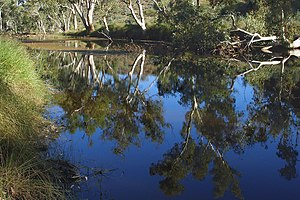 MacDonnell Ranges - Image: A221, West Mac Donnell National Park, Australia, Ellery Creek reflects River Red Gum trees, 2007