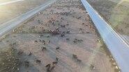 File:ANZCO Wakanui feedlot drone footage.webm
