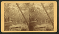 A Fine view of the Oklawaha River at Palmetto Landing, from Robert N. Dennis collection of stereoscopic views.png