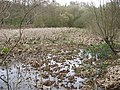 A Pond overrun with Reeds, Bookham Common - geograph.org.uk - 1237649.jpg