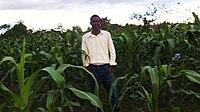 A SOIL agricultural intern inspects the corn crop. (16407256040).jpg