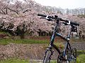 A bicycle against the cherry tree. 桜と自転車 (6933578552).jpg