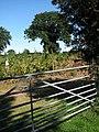 A field on a fruit farm - geograph.org.uk - 548679.jpg