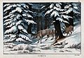 A group of reindeer searching for food in a snowy forest. Co Wellcome V0022839.jpg