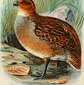 A hand-book to the game-birds (1896) (14775285753).jpg