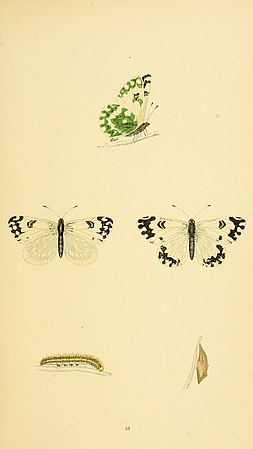 A history of British butterflies BHL14821144.jpg