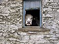 A local resident of Litton^ - geograph.org.uk - 1754844.jpg