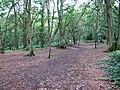 A path through Mousehold Heath - geograph.org.uk - 2061996.jpg