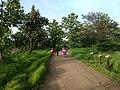 A trail at Ambazari Biodiversity Park, Nagpur.jpg