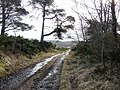 A wet track above Whiteface - geograph.org.uk - 1173543.jpg