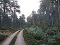 Abernethy Forest - geograph.org.uk - 612811.jpg