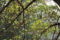 Acharya Jagadish Chandra Bose Indian Botanic Garden - Howrah 2011-01-08 9850.JPG